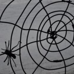Pajkova mreža